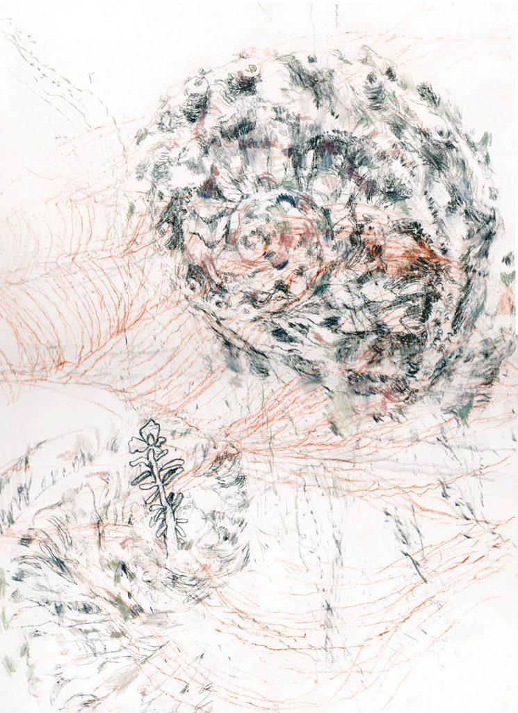 dessin représentant un coquillage en spirale au crayon et à la sanguine avec une fleur, d'Emmanuel Rivière